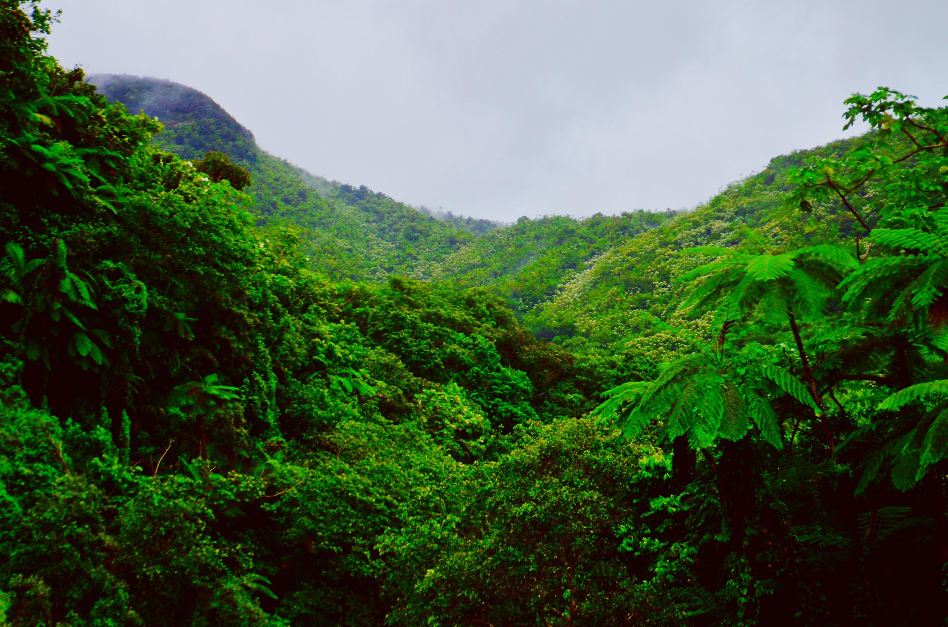 Bono Regalo Eco House Privilege en Pedras Salgadas SPA Nature Park 2