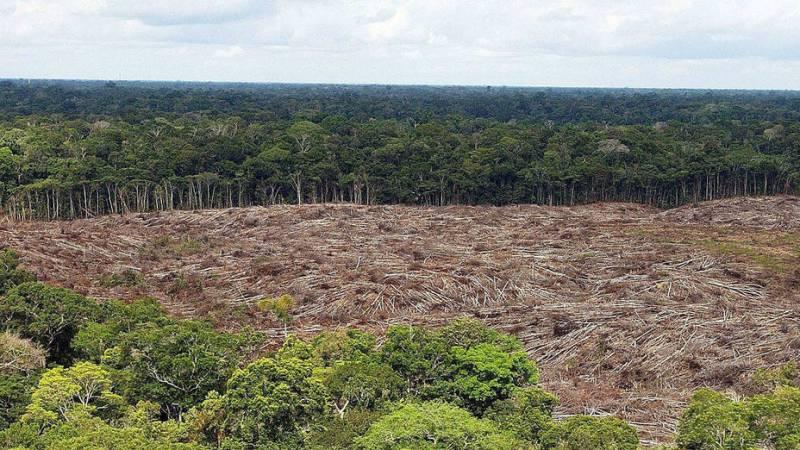 SELVA AMAZONICA BRASIL: ¿Por qué es muy importante para el planeta? 2