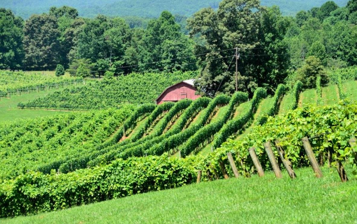Enoturismo: Buscando el viaje a la mejor región vinícola del mundo - GEORGIA 11