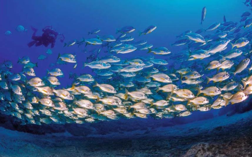 Dónde practicar buceo en las Islas Canarias