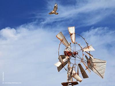LA FOTO DEL DIA: fly on fuerteventura 2