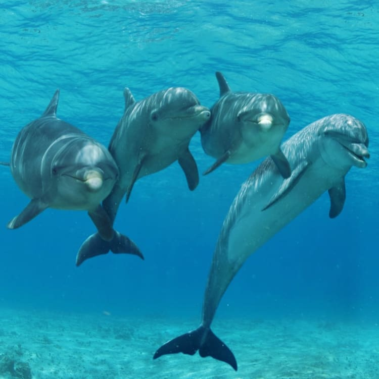 hábitat de delfines en Los Cabos México: Dolphin Discovery