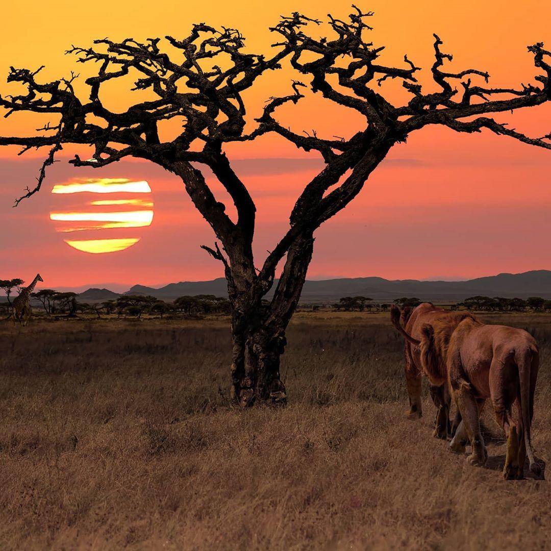 VIAJE A TANZANIA Y KENIA - VACUNAS