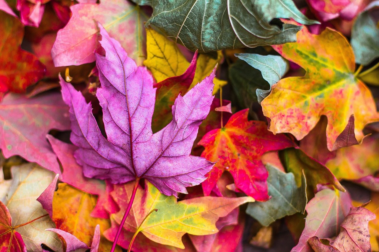 7 ideas para una escapada de otoño 24
